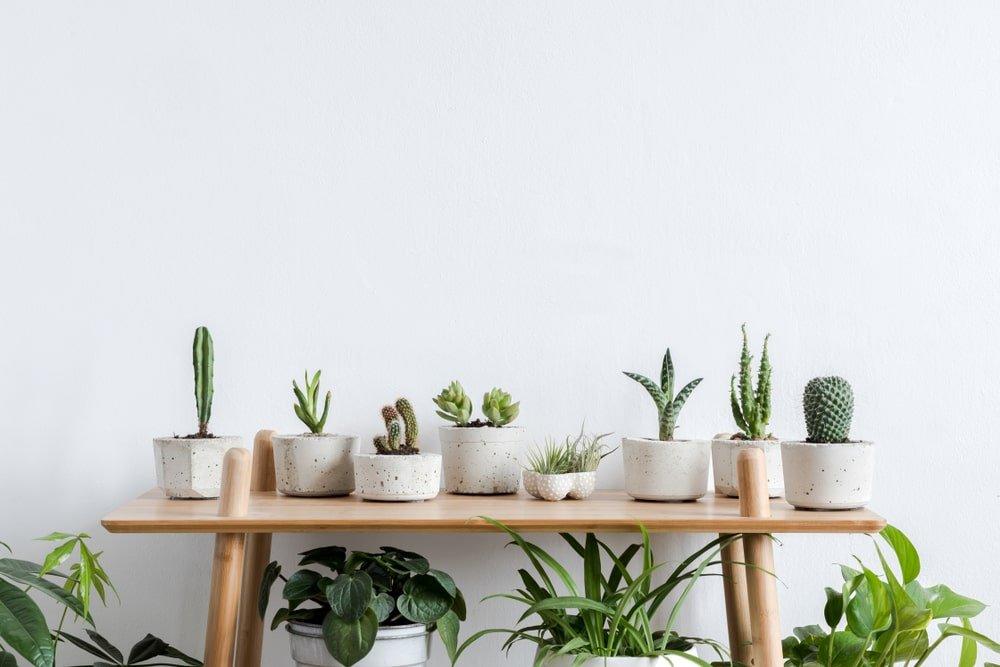 cactus detalhes apartamento